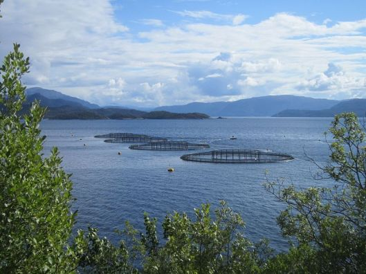 Salmon_aquaculture_in_Norway.jpg